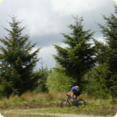 Riding around Grizedale